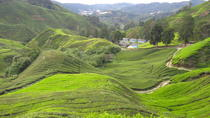 Private Transfer from Kuala Lumpur International Airport to Cameron Highlands, Kuala Lumpur, ...
