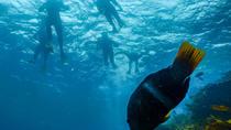 Dolphin Cruise, Seal Swim and Reef Snorkel Adventure, Mornington Peninsula, Mornington Peninsula,...