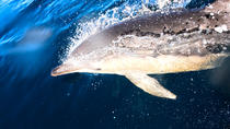 Dolphins and Seals Wildlife Scenic Boat Tour Mornington Peninsula, Mornington Peninsula, Dolphin &...