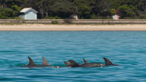 Dolphins and Seals Wildlife Scenic Boat Tour Mornington Peninsula, Mornington Peninsula, Dolphin & ...