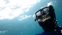 Mornington Peninsula Discover The Bay Charter Boat Snorkel Tour , Mornington Peninsula, Snorkeling