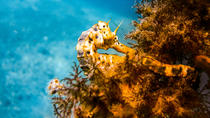 Mornington Peninsula Small-Group Seahorses Snorkel Tour, Schiereiland Mornington