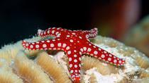 1 Day Snorkeling Marsa Alam, Marsa Alam, Scuba Diving