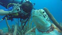 Oranjestad Shore Excursions : Pedal Kayak to Mmikes Reef, Aruba, Kayaking & Canoeing