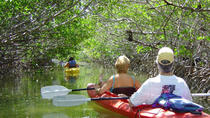 Key West Mangrove Kayak Eco Tour, Key West