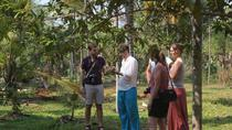 Spice Tour and Home-Cooked Goan Lunch at an Organic Plantation, Goa, Plantation Tours