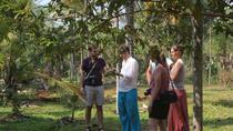 Spice Tour and Home Cooked Goan Lunch on an Organic Plantation, Goa