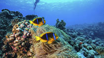 Full-Day Catalina Island Scuba Diving Tour from La Romana, La Romana, Day Cruises