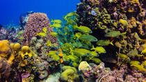 Full-Day Catalina Island Scuba Diving Tour from Punta Cana, Punta Cana, Snorkeling