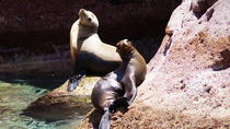 Espiritu Santo Island Tour: Day trip to La Paz, Los Cabos, Snorkeling