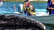 Gray Whale-Watching 2-Day Experience in Magdalena Bay, Los Cabos, Dolphin & Whale Watching