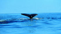Whale Watching Kayak Tour from Batemans Bay, New South Wales, Kayaking & Canoeing