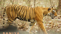 ROYAL RAJASTHAN TOUR WITH RANTHAMBORE NATIONAL PARK, New Delhi, Attraction Tickets