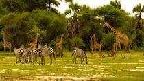 3 day Tanzania Safari, Arusha, Multi-day Tours