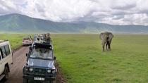 8-day-Safari Northern Circuit& Zanzibar Island, Arusha, Multi-day Tours