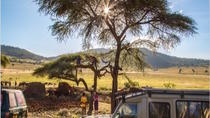Safari de 5 jours en Tanzanie, Arusha, Multi-day Tours