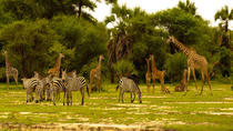 Safari Tanzanie 3 jours, Arusha, Multi-day Tours