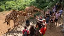 Half-Day David Sheldrick Elephant Orphanage, Giraffe Center, and Karen Blixen Museum Tour from...