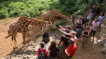 Half-Day David Sheldrick Elephant Orphanage, Giraffe Manor, and Karen Blixen Museum Tour from ...