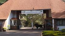 Half Day Nairobi National Park, Nairobi, Nature & Wildlife
