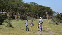 Lake Naivasha Walking with Animals Day Trip From Nairobi , Nairobi, Day Trips
