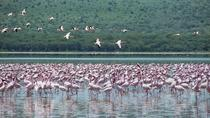Lake Nakuru National Park Day Tour from Nairobi , Nairobi, Day Trips