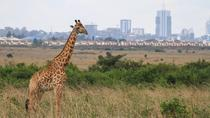 Nairobi National Park, Elephant Orphanage, Giraffe Center and Karen Blixen Museum, Nairobi, Day ...