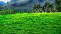 3-Day Munnar Private Tour from Madurai, Tamil Nadu, Overnight Tours