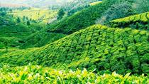 3-Day Munnar Tour from Madurai, Madurai, Overnight Tours