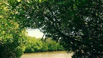 Day Tour to Pichavaram Mangrove Forest and Thillai Nataraja Temple in Chidambaram from Pondicherry, ...