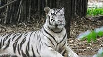 Private Full-Day Tour of Arignar Anna Zoological Park from Chennai, Chennai, Day Trips