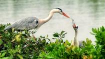 Visit to Vedanthangal Bird Sanctuary from Chennai, Chennai, Day Trips
