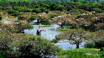 Visit to Vedanthangal Bird Sanctuary from Chennai