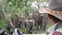 Full-Day Kruger Safari from Skukuza, Kruger National Park, Safaris