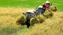Life on the Mekong Delta Private Tour from Ho Chi Minh City, Ho Chi Minh City, Day Trips