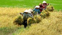 Life on the Mekong Delta Tour from Ho Chi Minh City, Ho Chi Minh City, Day Trips