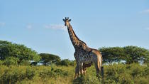 12-Day Highlights of the Cape and KwaZulu Natal Tour from Cape Town, Cape Town, Multi-day Tours