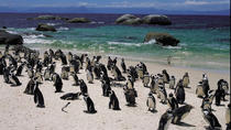 15-Day Picturesque South Africa Journey from Cape Town, Cape Town, Multi-day Tours