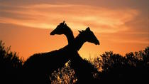 3-Day Kruger Experience Tour from Johannesburg, Johannesburg, Multi-day Tours