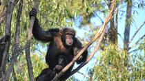 Chimpanzee Eden and Botanical Gardens Private Tour from Hazyview, Kruger National Park