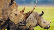 Full-Day Hluhluwe Game Reserve Tour from Durban, Durban, Safaris