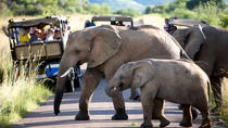 Pilanesberg Game Reserve Private Day Tour from Johannesburg, Johannesburg, Private Sightseeing Tours