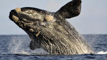 Private Cape Riviera and Whale Watching Tour from Cape Town, Cape Town, Private Sightseeing Tours