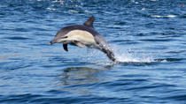 Private Marine Day Tour in Durban, Durban, Private Sightseeing Tours