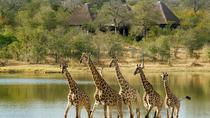 Private Tshukudu and Khamai Interactive Encounter from Hazyview, Kruger National Park