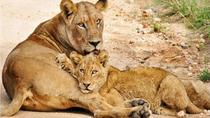 South Africa 14-Day Tour from Johannesburg, Johannesburg, Multi-day Tours