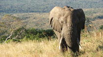 South African 6-Day Adventure Tour from Johannesburg, Johannesburg, Multi-day Tours