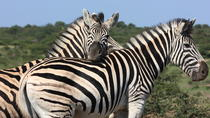 South African Wildlife and Culture 7-Day Tour from Johannesburg, Johannesburg, Multi-day Tours