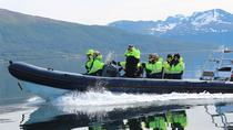 A taste of the Norwegian seafood by Zodiac, Tromso, Day Cruises