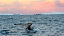 Orca and Humpback Whale Safari with Marine Biologist in a Zodiac from Tromso, Tromso, Dolphin & ...